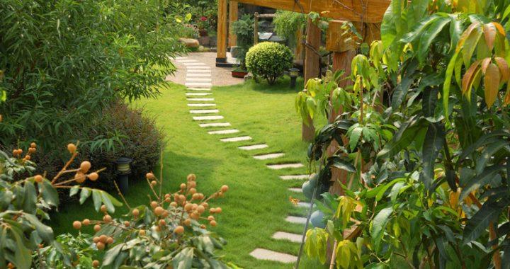 garden oasis stone path
