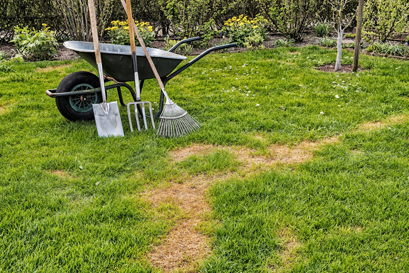 Lawn Before Lawn Repair