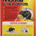 Rat & Mouse Glue Boards