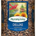song bird food