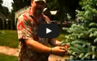 How to Prune Plants & How to Prune Bushes