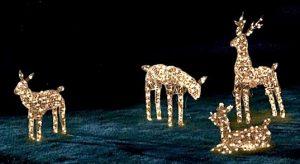 Holiday Light Displays 9