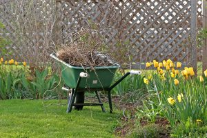 Read the article: 5 Things to Include on Your Yard Cleanup List