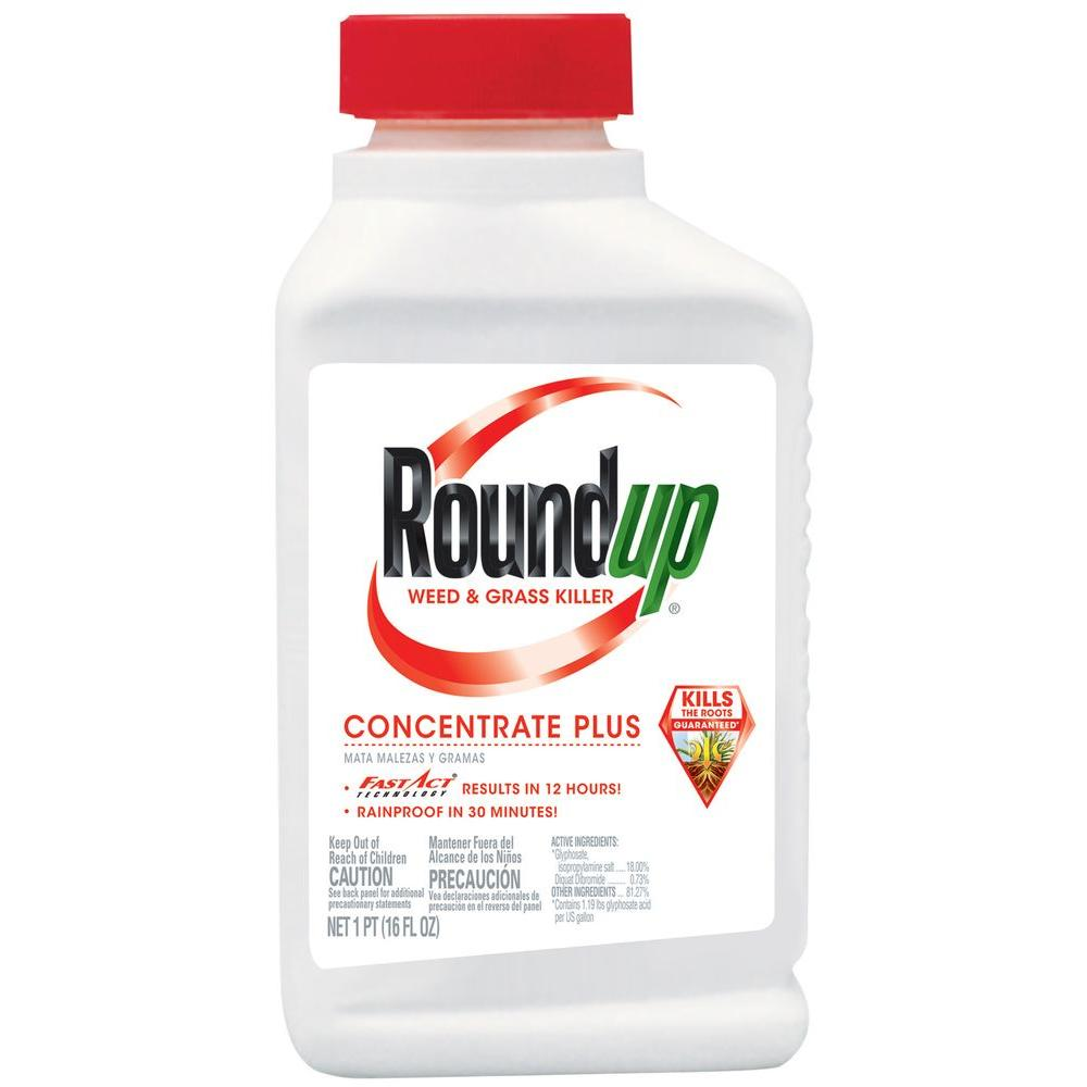 Roundup Concentrate, 16oz