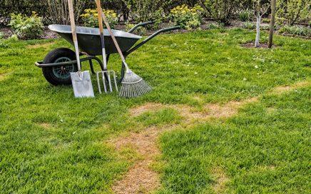 Lawn Before Lawn Repair