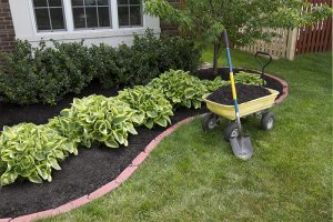 Sale on Lawn Food and Potting Soil
