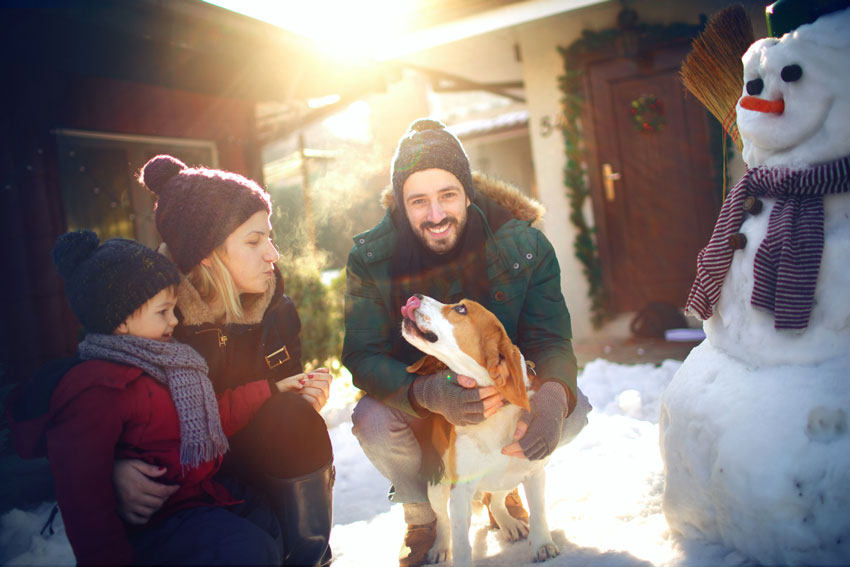 Using Pet Safe Ice Melt After Shoveling will Protect Those Paws from the Burn