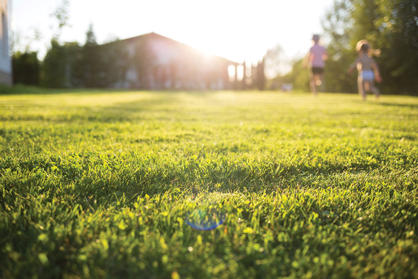 3 Summer Lawn Care Tips from Scotts