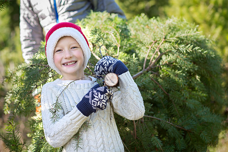 Christmas Tree Sale at Greenville GNH 2020